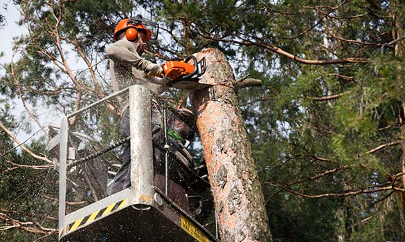 Tree Removal Palatine IL